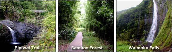 Pipiwai Trail: Cascades   Bamboo Forest   Waimoku Falls